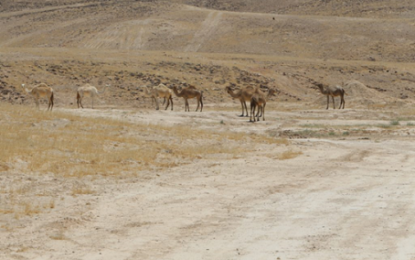 פרשת במדבר: מפקדים ללא מטרה